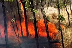 Grass Fire 3 Stock Footage