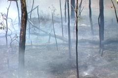 Grass fire burnt Stock Footage