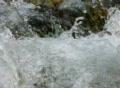 High Speed Camera : River water flow slow motion Loop Footage