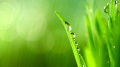 grass rain 98 - stock footage