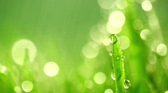 grass rain 992 - stock footage