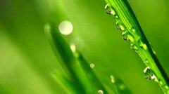 Grass rain 994 Stock Footage