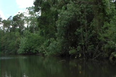 Jungle River 2 Stock Footage