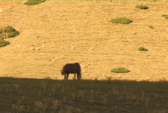 Horse 10 Stock Footage