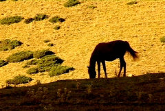Horse 12  Stock Footage