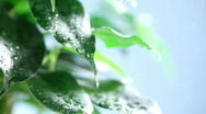Stock Video Footage of leaf rain03