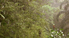 Rain falling in the rainforest, pan to Indian house Stock Footage