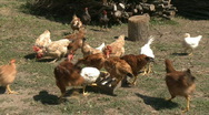 Chickens in farm Stock Footage