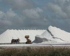 PAL: Salt  Stock Footage