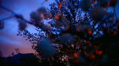 Spring time twilight Stock Footage