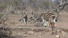 african wildlife - stock footage