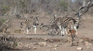 Stock Video Footage of african wildlife