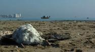 Dead seagull on the beach Stock Footage