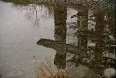 Reflection of Totem Poles Stock Footage