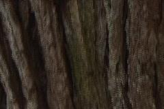 Tree Trunk 02 Stock Footage