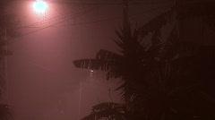 Street Lights & Palm Trees On Misty Night Stock Footage