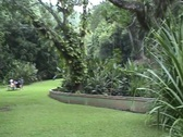 Park in Jamaica 01 Stock Footage