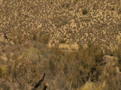 Red Rocks National Conservation Area 01 Stock Footage