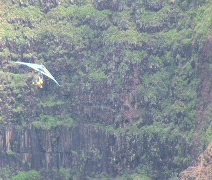 Power Hangglider 3 Stock Footage