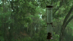 Bird Feeder in the Rain - stock footage
