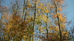 Autumn leaves shine in the sunlight (High Definition) Stock Footage