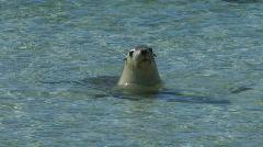 Sea Lion Stock Footage