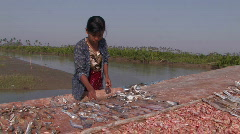 Drying Fish - stock footage