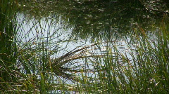 Rippling water reflects the swaying grass (High Definition) - stock footage