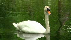 Swan on a green pond Stock Footage