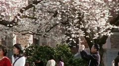 Photographing Cherry Blossoms Stock Footage