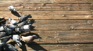 Stock Video Footage of Hungry pigeons trample each other to get food (High Definition)