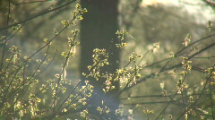 Leaves are bathed in sunlight amidst flying bugs (High Definition) - stock footage