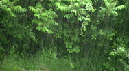 Heavy rain falls amidst a lush green forest (High Definition) Stock Footage