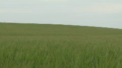 Pan across wheat fields and farmland - stock footage