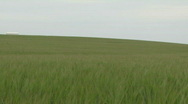 Stock Video Footage of Pan across wheat fields and farmland