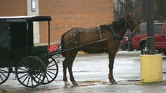 Amish Horse And Carriage Parked In A Car Park New York State Stock Footage