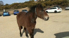 Pony in carpark Stock Footage