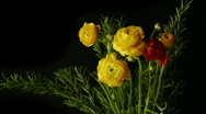 Red flower, Yellow flower Stock Footage