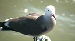 Seagull rests on a railing amidst sunny day (High Definition) Stock Footage