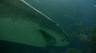 Closeup of a shark swimming through the murky water Stock Footage