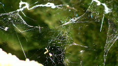 Sunlight shines from spiderweb swaying in the wind Stock Footage