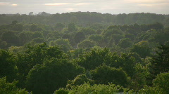 Tops of many trees tower towards the sky (High Definition) Stock Footage