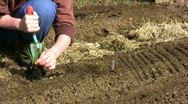 Planting onions Stock Footage