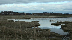 Belle Isle Marsh reeds in foreground Stock Footage