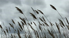 Marsh reeds with airplane landing Stock Footage