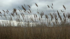 Belle Isle Marsh reeds Stock Footage