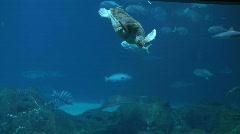 sea turtle and hammerhead shark - stock footage