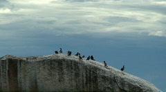 Malawi: cormorants on a rock Stock Footage