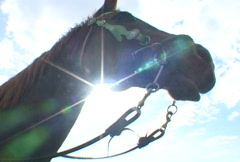 Horse Attacks Lens Stock Footage