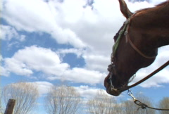 Close Up of Horse Series Stock Footage
